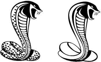 Two Cobra snakes vinyl sticker customized online.  Cobra-1