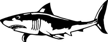 Shark Decal Customized Online. 1140